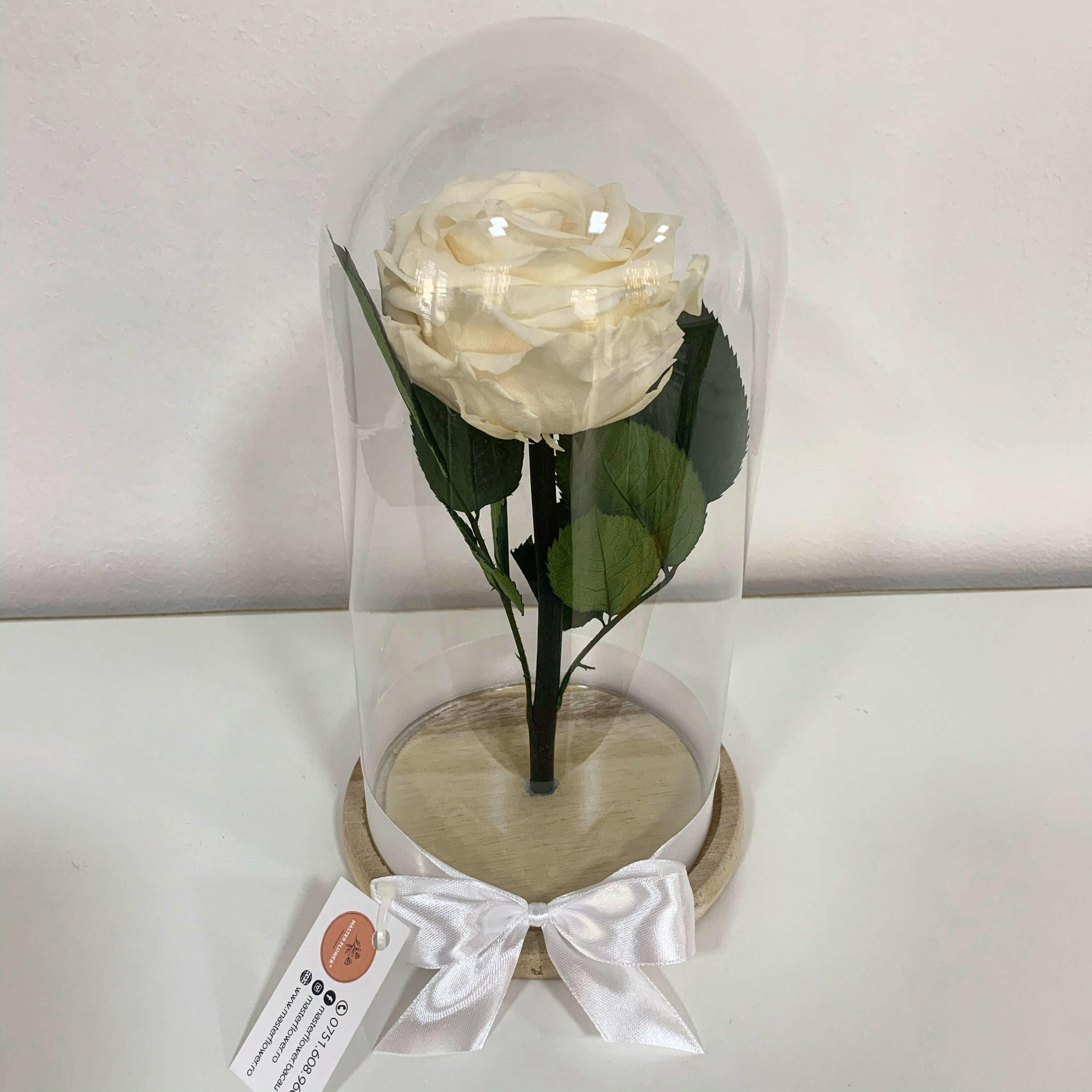 Trandafir criogenat alb - Champagne