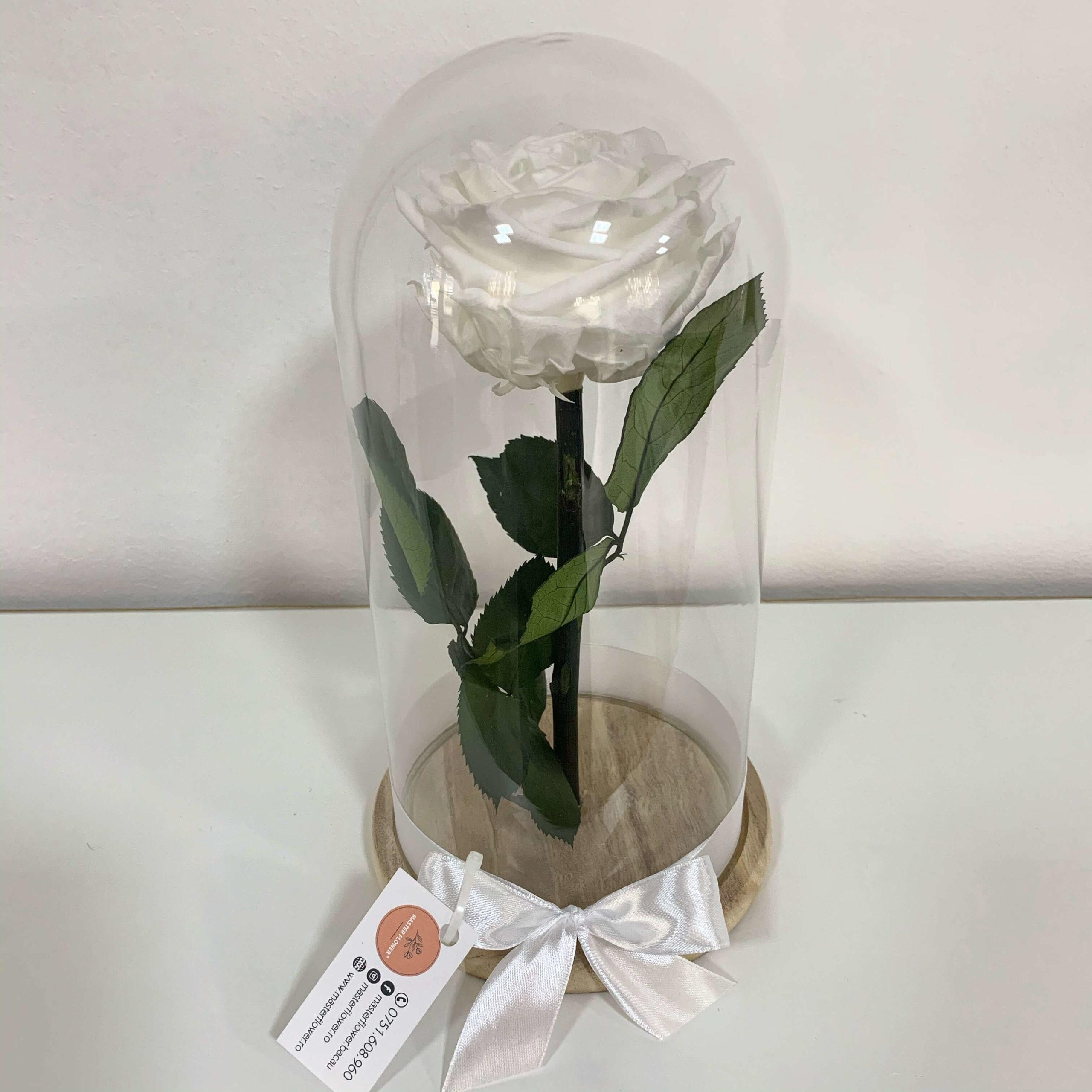 Trandafir criogenat alb - Pure white