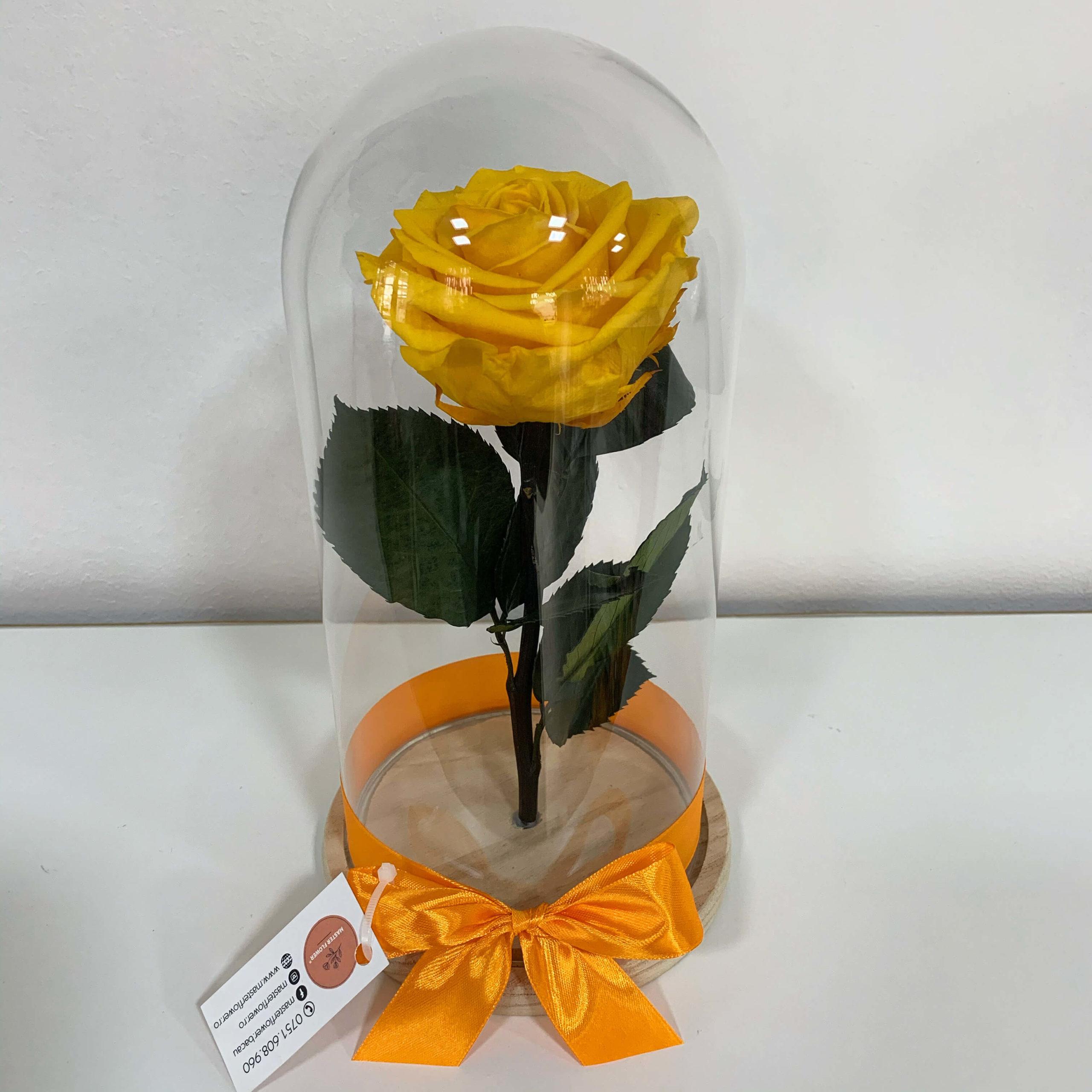 Trandafir criogenat galben - Warm Yellow