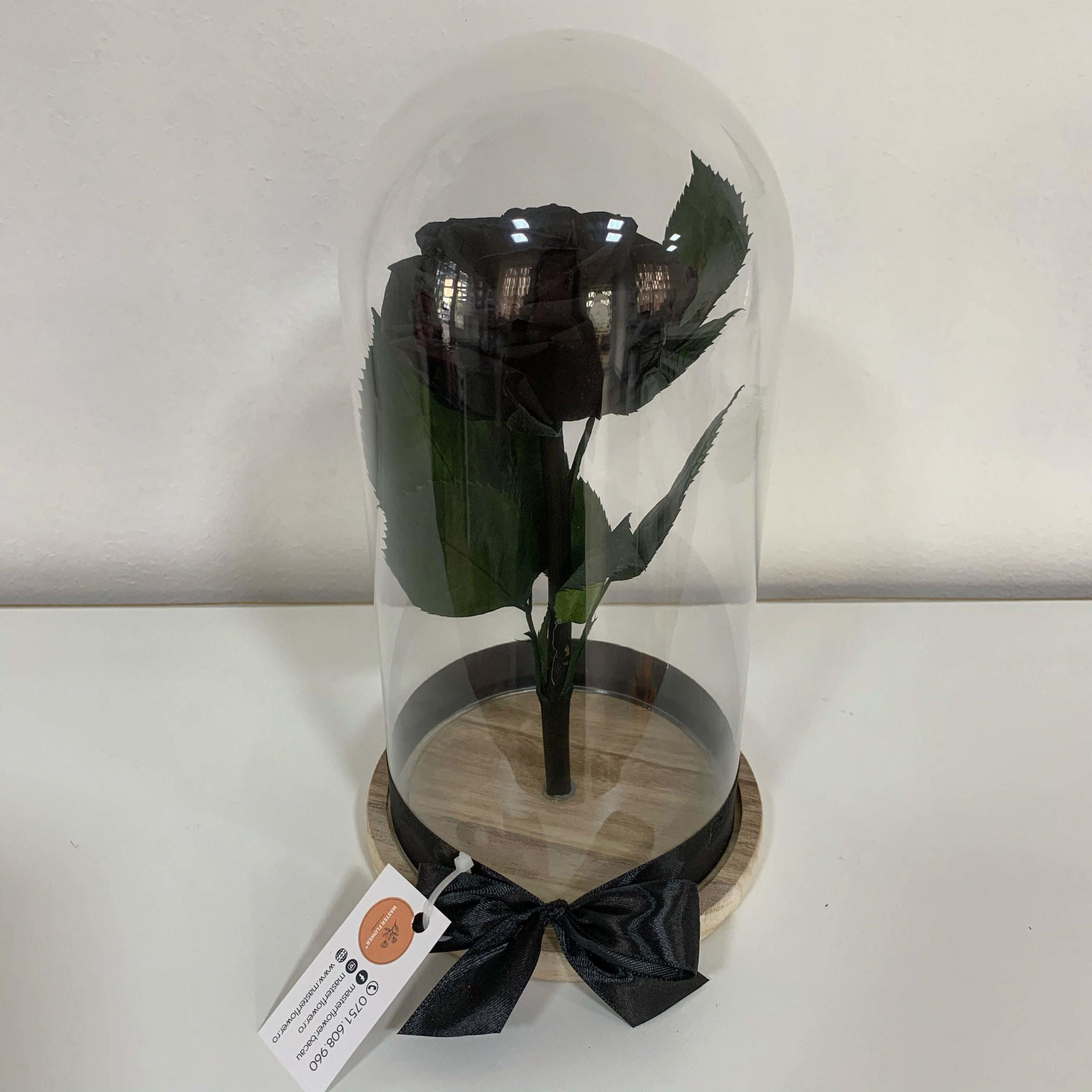 Trandafir criogenat negru - Black Devil