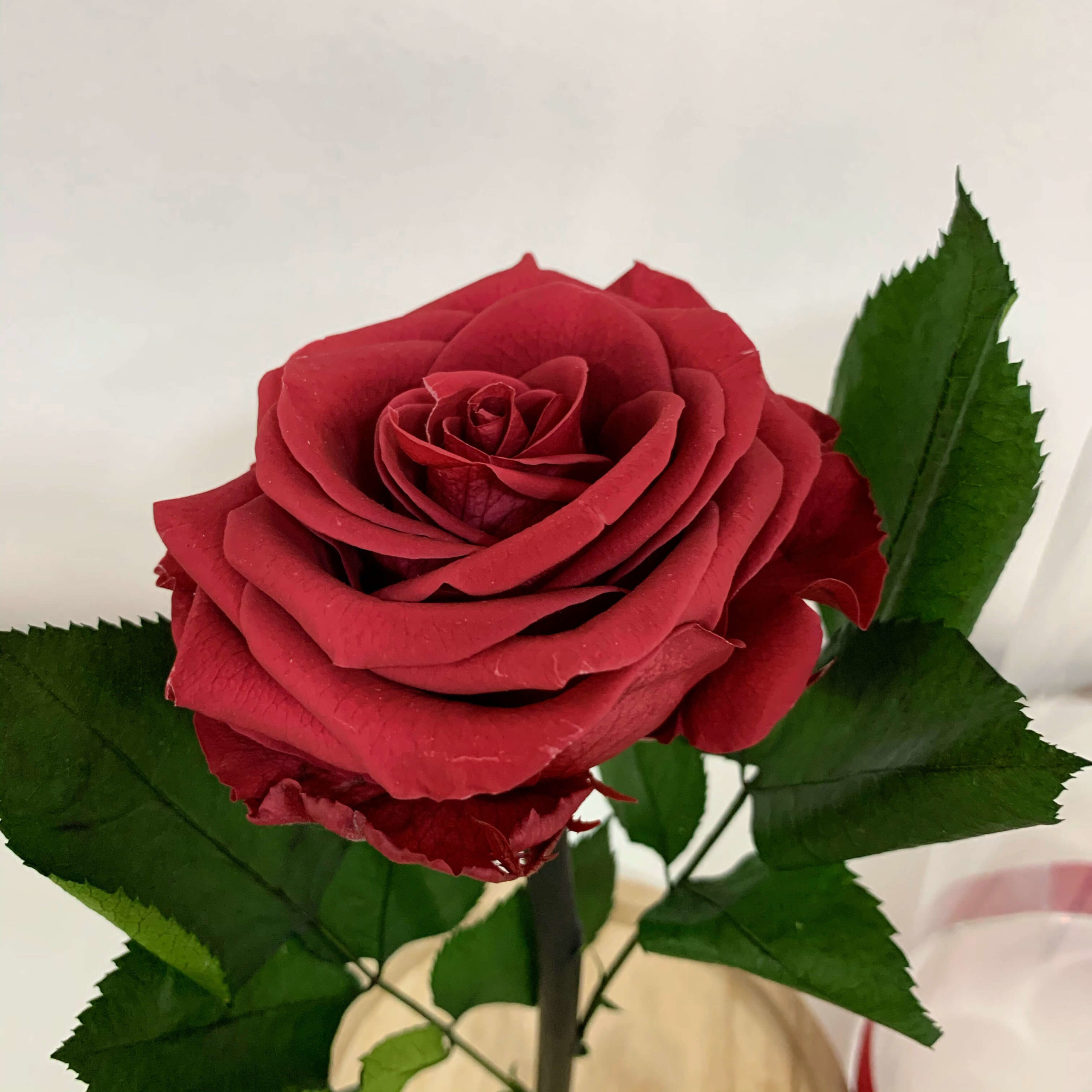 Online floral shop in Bacau with free home delivery