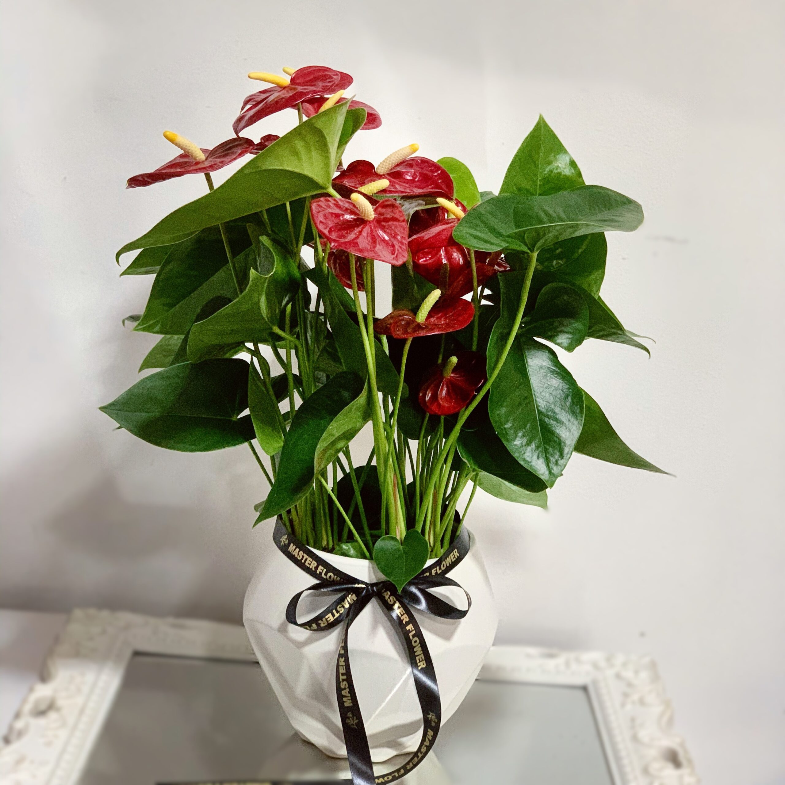 Anthurium Mini Rosu